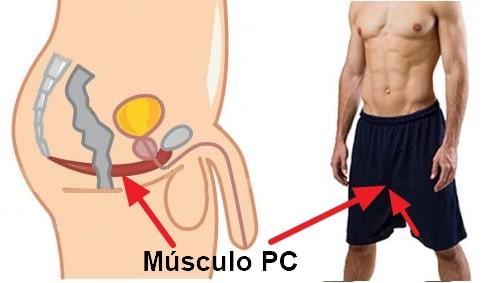 Como Combatir la Eyaculación Precoz Fortaleciendo el Músculo Pc con Ejercicios Kegel para Hombres